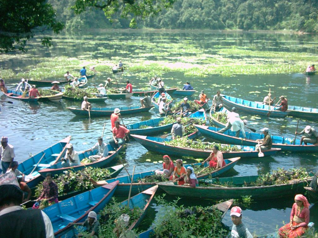 Boats with water hyacinth1